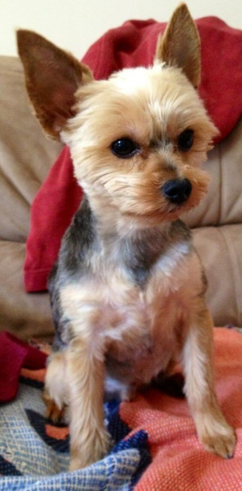 50 Cutest Dogs With Brilliant Haircuts Hairstylecamp