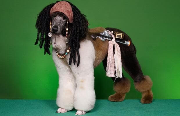 funniest dog haircuts with Costume Party