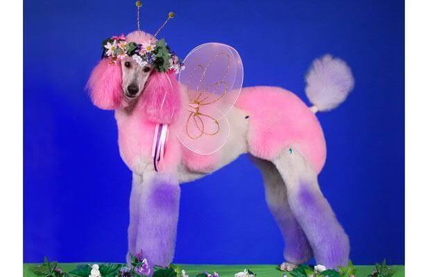 Fairy look funniest dog hairstyle