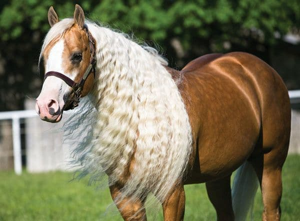 10 Smartest Horse Mane Braiding Ideas Hairstylecamp