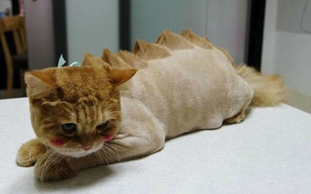 41 Wonderful Cats With Cute And Adorable Haircuts