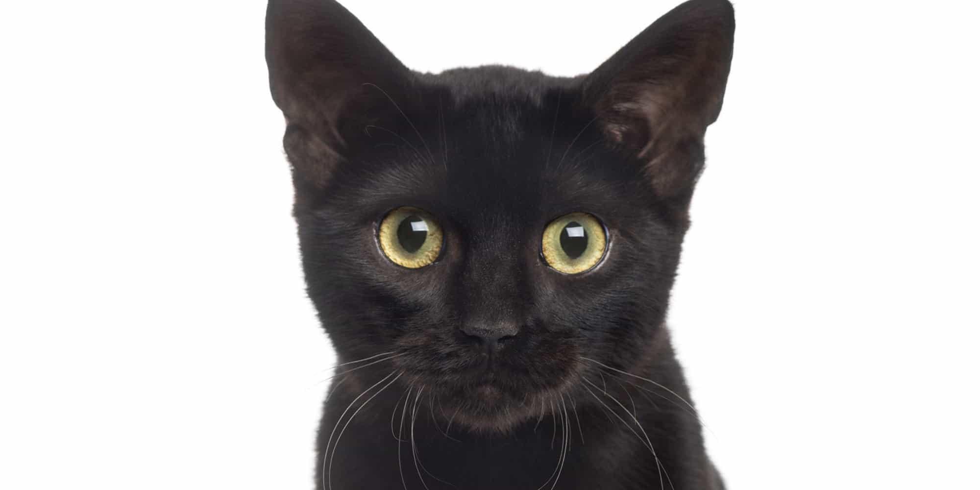 black cat haircut