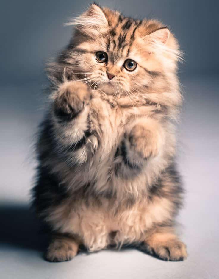 Kitten style for cat