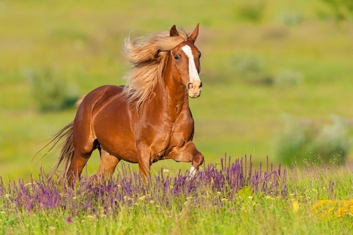 horse hairstyles