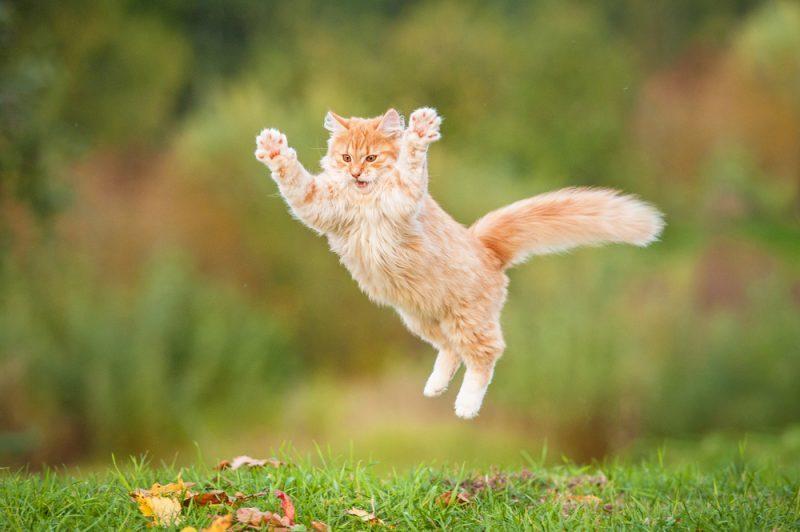 cute cat jump